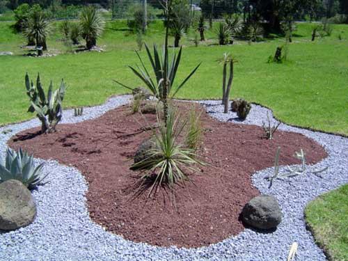 Incrementa cge tlaxcala colecci n de plantas en jard n for Plantas exoticas para jardin